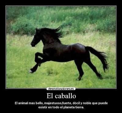 mujer que hace el amor con caballo m 225 s de 25 ideas incre 237 bles sobre frases de caballos en
