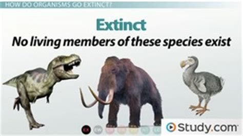 what is extinction defining background and mass