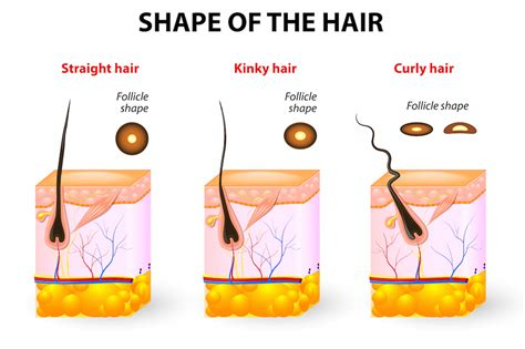 hair and head types take better care of your scalp