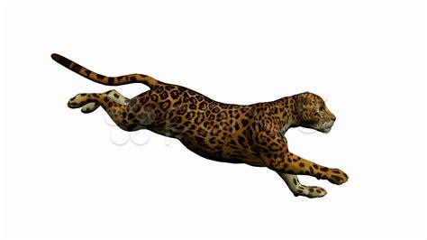 jaguar clipart jaguar running clipart