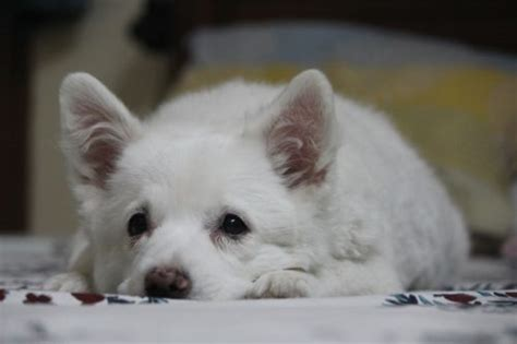 my puppy won t eat help my new puppy won t eat canna pet 174