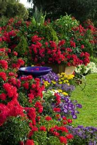 the secret of successful rose gardening tips for