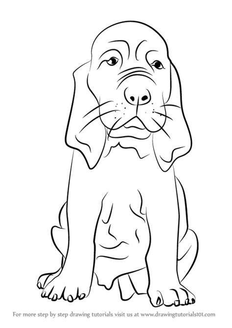 coloring pages of bloodhounds step by step how to draw a bloodhound puppy