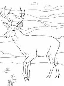Whitetail Deer Coloring Pages sketch template