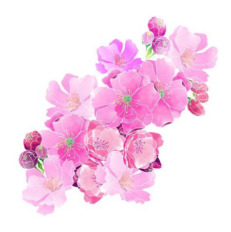 fiori di ciliegia fiori di ciliegia dell acquerello fotografia stock