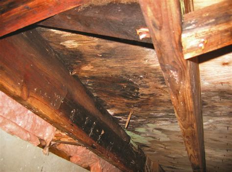 Crawl Space Mold & Rot Control with a Crawl Space Vapor