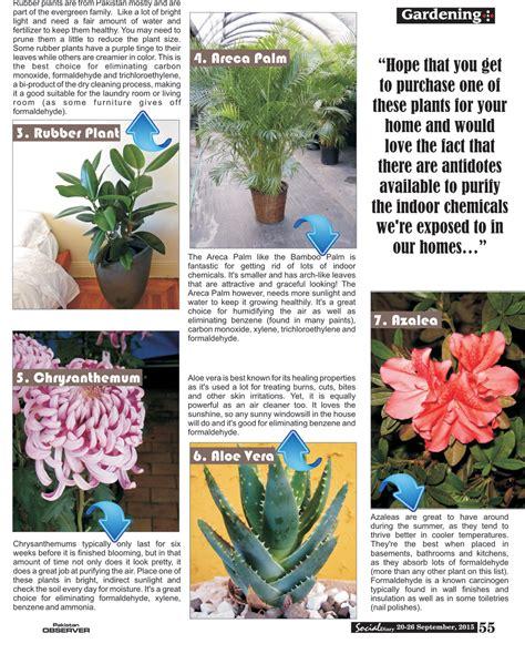 do aloe plants need sunlight 100 do aloe plants need sunlight amazon com banana