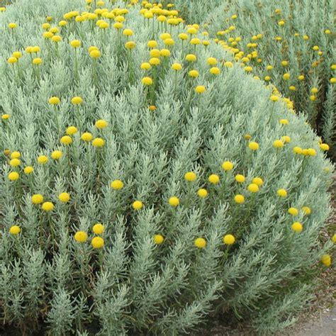 Plantes Et Jardins by Santoline Plantes Et Jardins