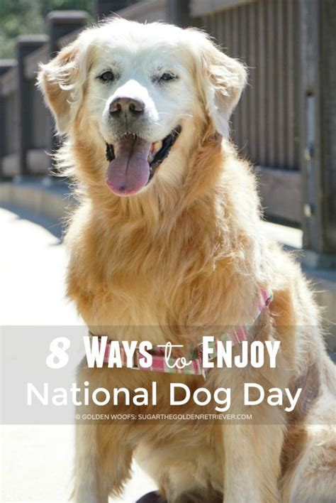 national golden retriever day 8 ways to enjoy national day and be sleepypodsafe