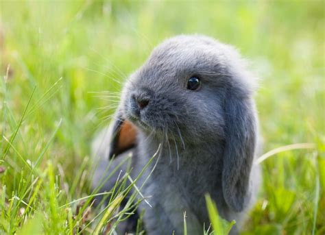 Dogs And Blindness Rabies In Rabbits Petmd