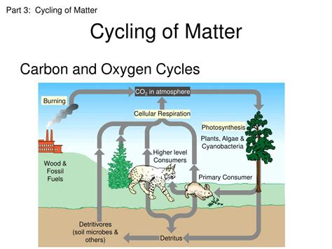 parts of matter ppt ecology powerpoint presentation id 423922