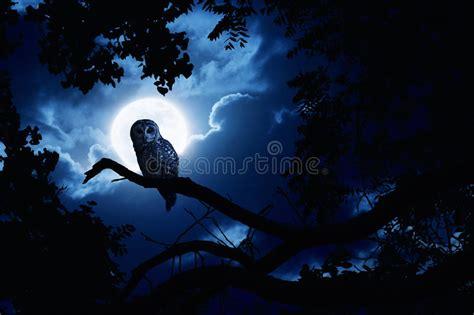 imagenes en movimiento halloween descargar salvapantallas movimiento halloween owl watches