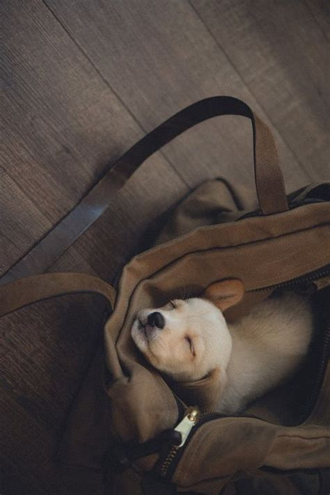Suzy Puppy Bag 213 best images about things that make you say awe on
