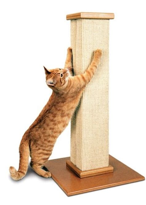 Cat Scratching by The Ultimate Scratching Post