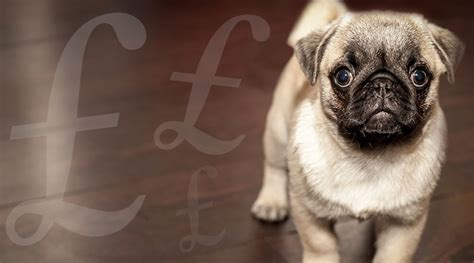 how much do pugs cost uk the average briton spends almost 163 70k on their pets and no that doesn t