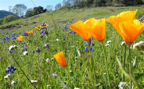 The Weekend Link by The Weekend Link List June 16 Land Trust Of Napa County