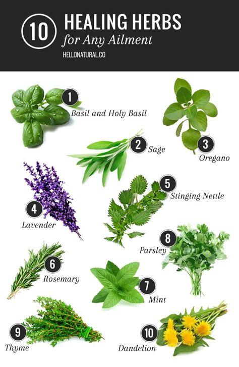 best 25 healing herbs ideas on pinterest herbal plants herbs and herbal medicine