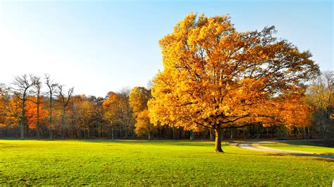 Yellow Landscape Pictures Autumn Trees Beautiful Garden Yellow Leaves Green Grass