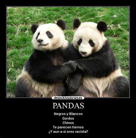 Memes De Pandas - memes de pandas 28 images i dont have a girlfriend sad