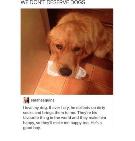 Dogs Deserve Better And So Do I Think by 25 Best Memes About Memes