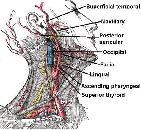 arteria carotide interna 301 moved permanently