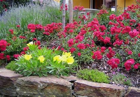 Wühlmäuse Im Garten Was Tun 2594 was tun gegen w 252 hlm 228 use gartenrat was tun gegen w hlm use