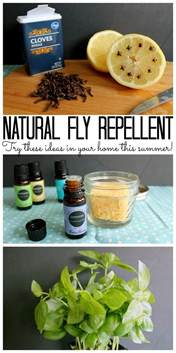home remedies for house flies best 25 homemade fly repellant ideas on pinterest