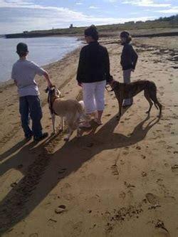 moncton new brunswick pet adoption maritime greyhound testimonials maritime greyhound adoption program