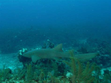 belize dive scuba diving in belize infolific