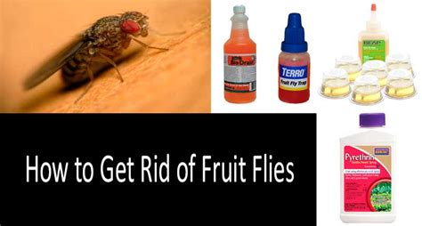 best way to get rid of flies in backyard best way to get rid of flies in backyard 28 images how