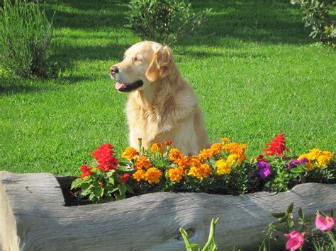 cani da giardino valerio moschetti il non 232 un ornamento da giardino