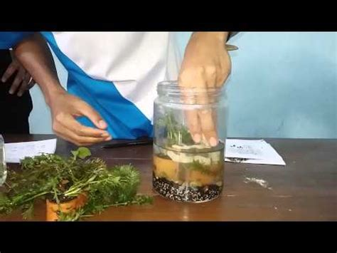 cara membuat filter aquarium tanpa listrik aquascape natural style all diy bogor indonesia doovi