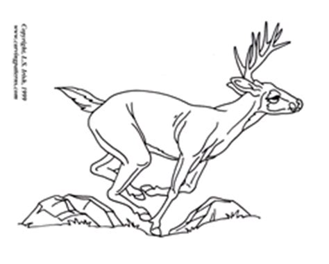 white tail deer pattern package download