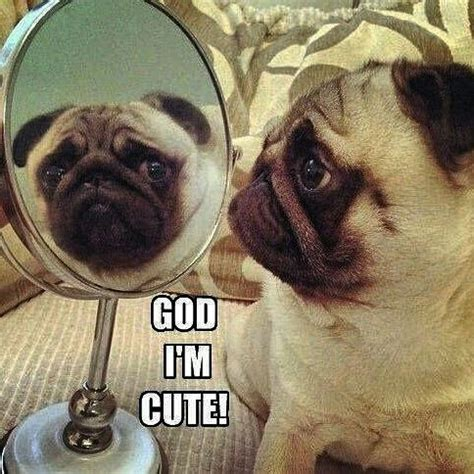 pug quotes sayings best 25 pug quotes ideas on pug pugs and pug puppies