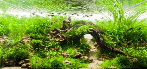takashi amano aquascaping techniques 岩が浮いている 水草レイアウト会の世界の頂点が別世界すぎる the international aquatic