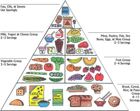 Food Pyramid Changes : My10Online