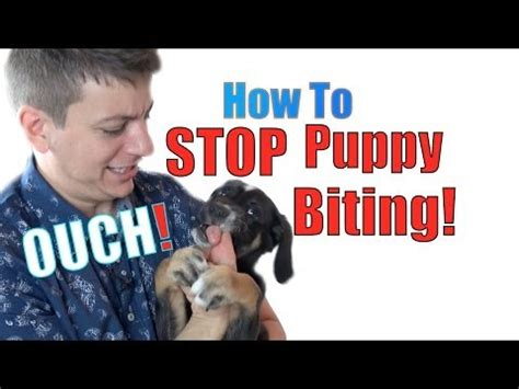 how to stop a pitbull puppy from biting how to stop pitbull puppy from biting how to stop you