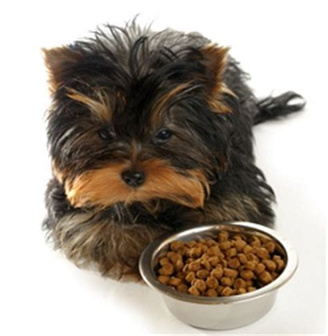 best food for yorkies at walmart choosing the best puppy food you can buy