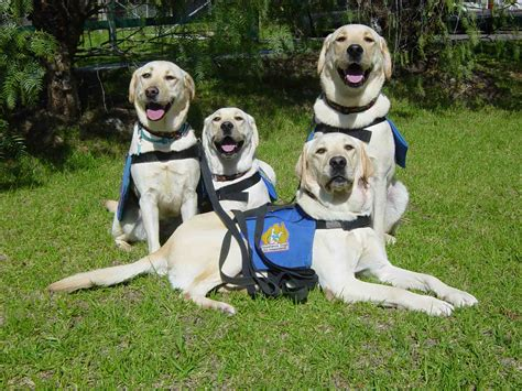 with dogs travelling with assistance dogs in usa