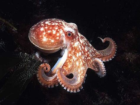 what color are octopus color in our world do animals see colors