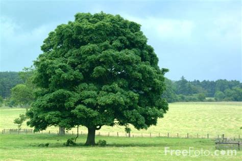 trees images tree northumberland pictures free use image 15 19 8 by