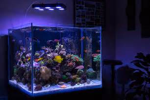 Marineland Frameless Cube Aquariums   Reef Central Online Community