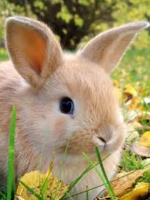 rabbit bunny with an eye to our evolution a on a mission to nurture and nourish