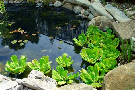 pictures of small backyard ponds 37 backyard pond ideas designs pictures