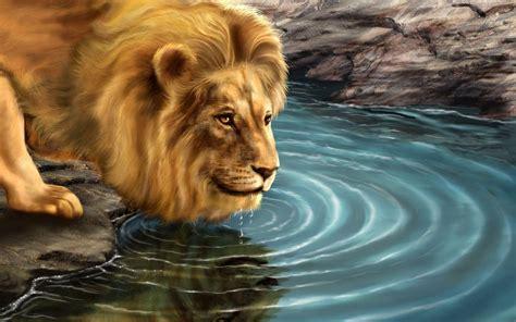 wallpaper free lion lion desktop backgrounds wallpaper cave
