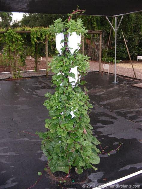 Best Vegetables For Vertical Gardening Vertical Vegetable Garden Vertical Gardening