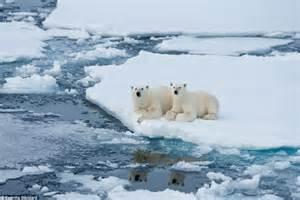 Polar Extinction Essay by Polar Essay Education Free