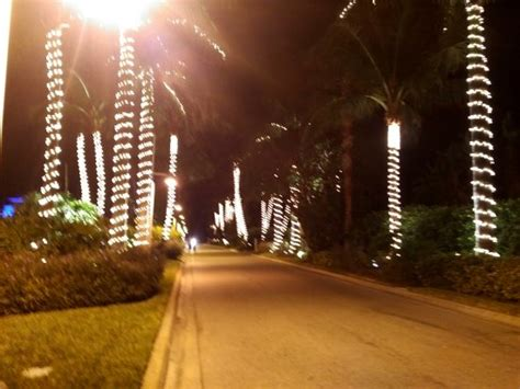 christmas decorations florida style picture of south