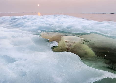 contest 2013 finalists the winners of the national geographic photo contest 2013