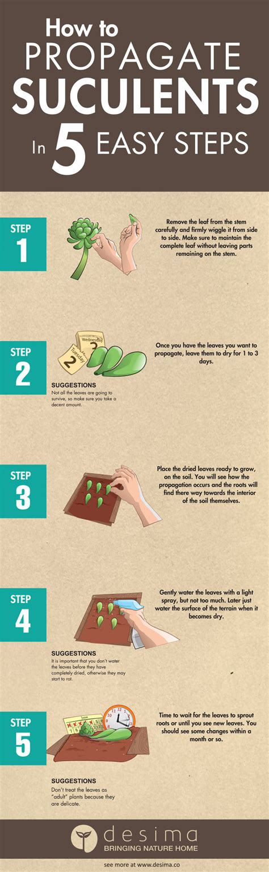 How To Successfully Propagate Succulents In 5 Easy Steps - how to propagate succulents in 5 easy step desima